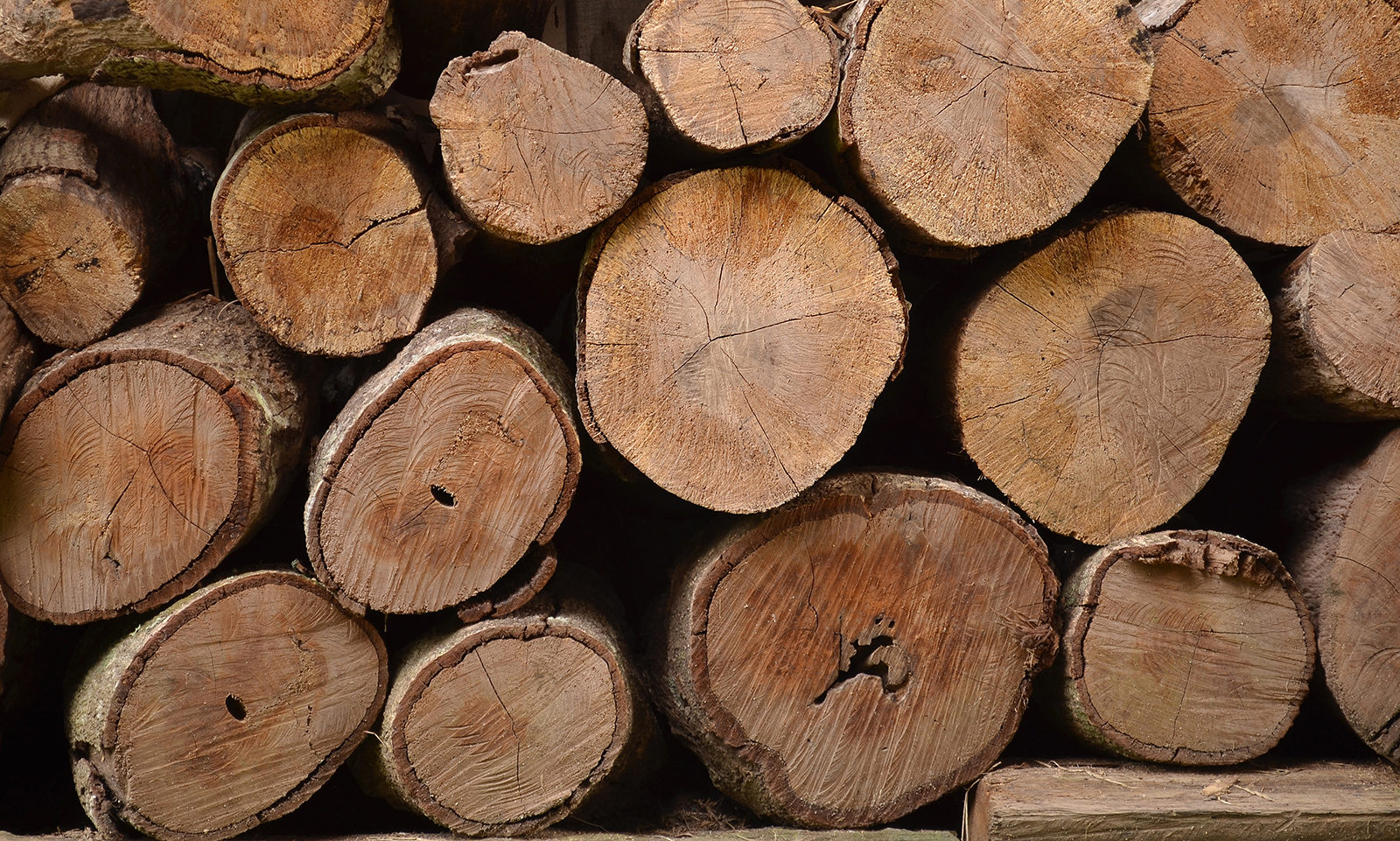 Wooden-logs-header