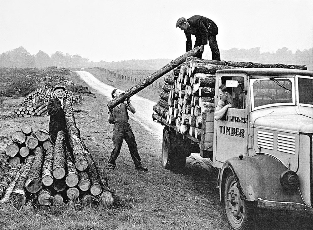 Arnold-Laver-timber-truck-Story
